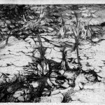 Lily Growths #4, 1958, etching, image size 11 7/8 x 17 7/8 inches